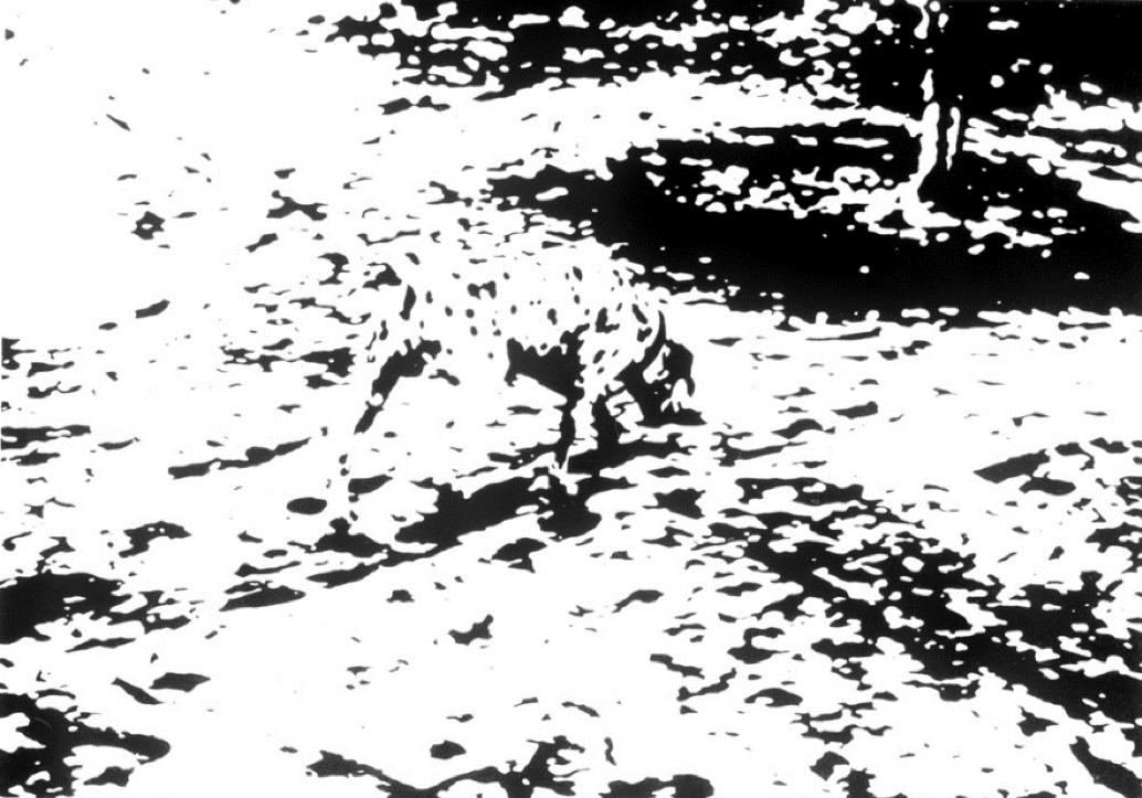 картинка на психику с коровой мотолодку